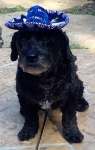 Lucy, celebrating her 7th birthday on Cinco de Mayo!