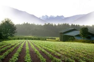 Cascadian-Farm